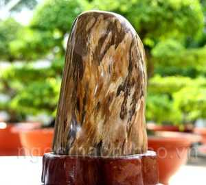 Gỗ Hóa Thạch Canxedon từ Ngọc Thạch Thảo