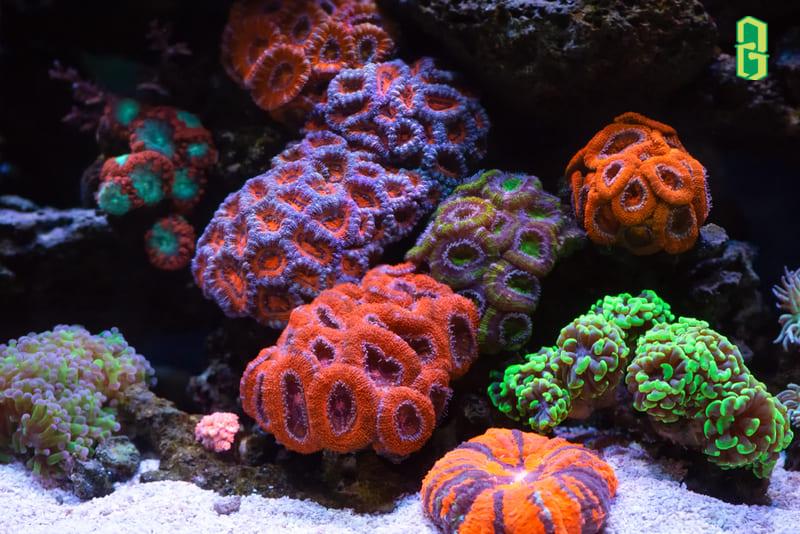 San hô là loài sinh vật biển tồn tại dưới dạng các thể polip nhỏ giống hải quỳ