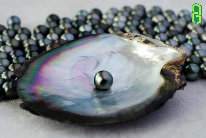 Tahitian Pearl - 1 trong những loại ngọc trai đen huyền bí và hấp dẫn nhất hành tinh