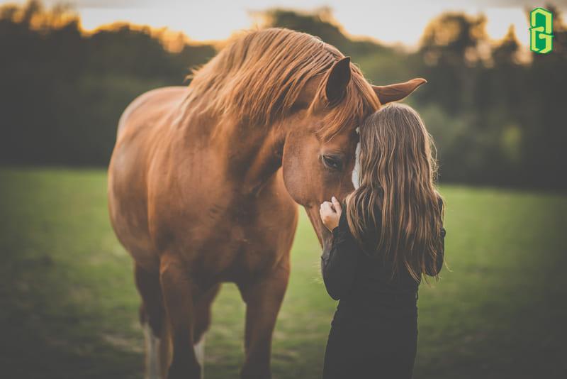 Hình Ảnh Con Ngựa Trong Đời Sống
