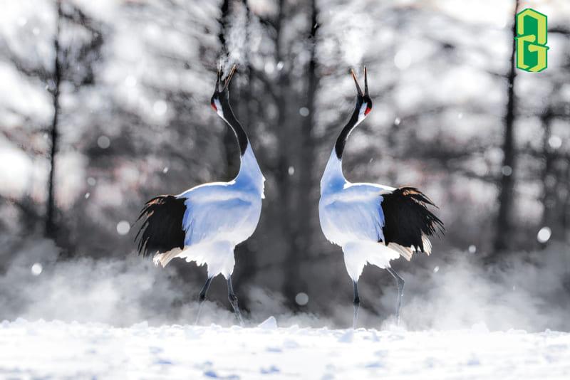 Chim Hạc Biểu Tượng Của Gia Đình Ấm Êm Hạnh Phúc