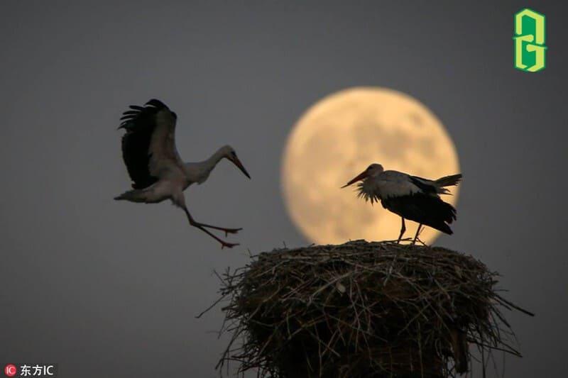 Chim Hạc Là Con Vật Của Đạo Giáo
